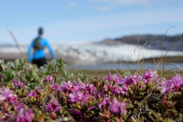 Groenlandia-fiori-Rogliatti-940x580